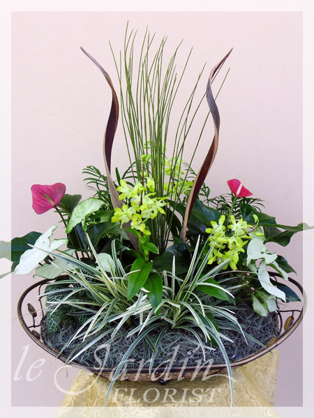 Orchid Plant Arrangements Palm Beach Gardens 561 627 8118